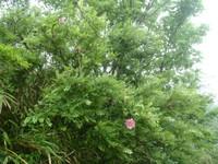 色濃い花を咲かせていた木
